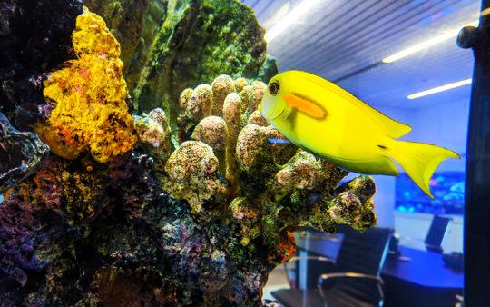 saltwater aquarium maintenance